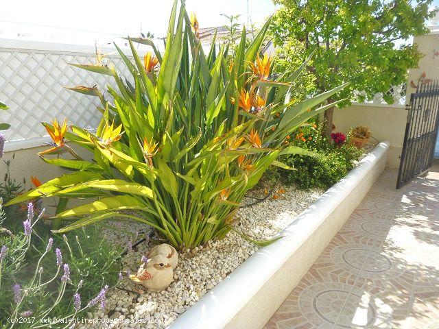 ea_south_facing_marbella_bungalow_for_sale_6jpg_14